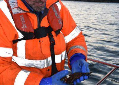 Lewis Mackenzie who hand dives for sugar kelp