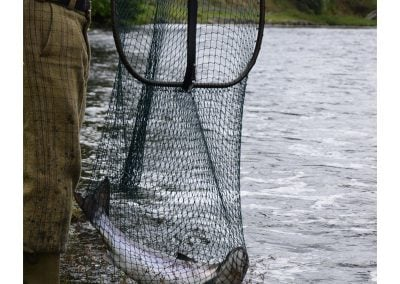 A bar of silver in the net! Another salmon caught