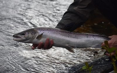 Fishing for Silver on the Carron