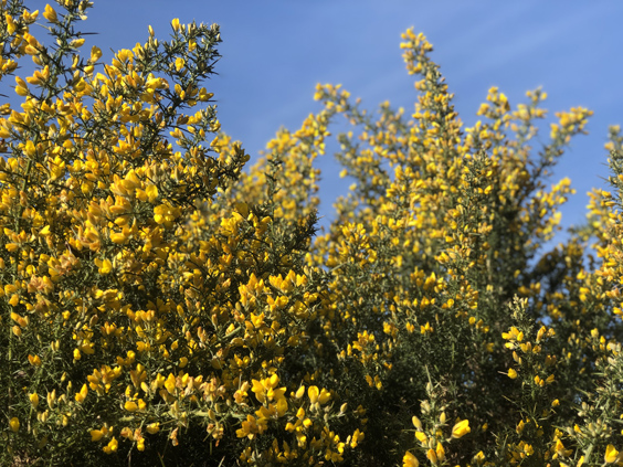 Inspired by nature : Wild Gorse Edit
