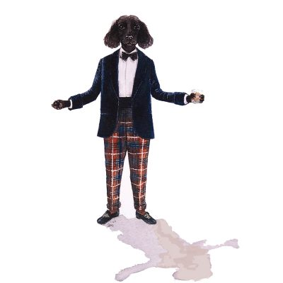 cocker spaniel dressed in black tie